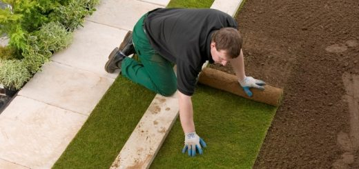Laying Rolawn turf